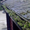 mouldy gutter system from stagnant water